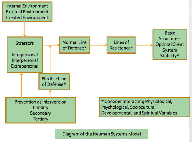 betty neumans systems model